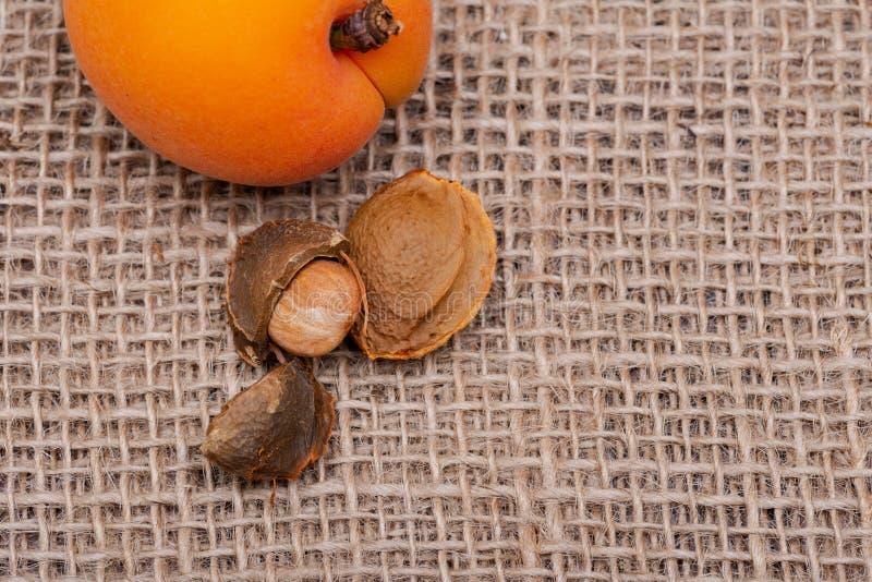 Os abricós e os núcleos de abricó orgânicos frescos a semente de um abricó, chamaram frequentemente 'uma pedra 'no fundo natural  imagem de stock royalty free