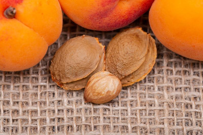 Os abricós e os núcleos de abricó orgânicos frescos a semente de um abricó, chamaram frequentemente 'uma pedra 'no fundo natural  foto de stock