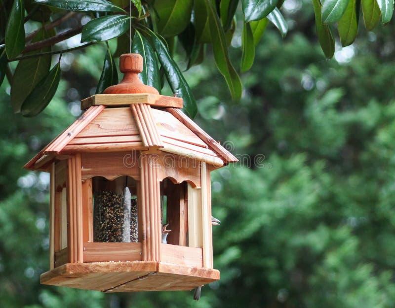 Os Alimentador-bicos do pássaro abrem fotografia de stock
