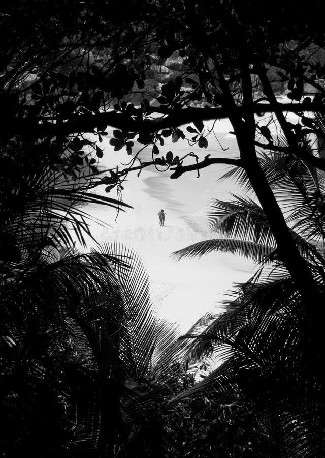 Os amantes em um deserto encalham visto através de uma floresta tropical fotografia de stock