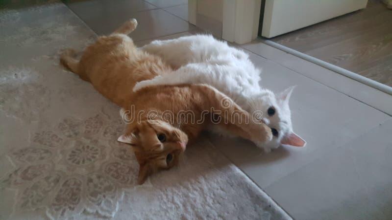 Os amigos do gato abraçam imagem de stock
