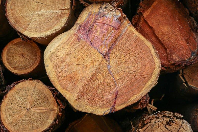Os anéis anuais de tronco de árvore racham a resina dos logs do grupo em uma base de registro cortada lisa do projeto do contexto fotos de stock