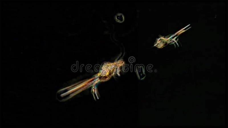 Os animais de derivação são chamados o zooplankton de que vieram em tamanhos do alll, das algas e as bactérias minúsculas, outros imagens de stock
