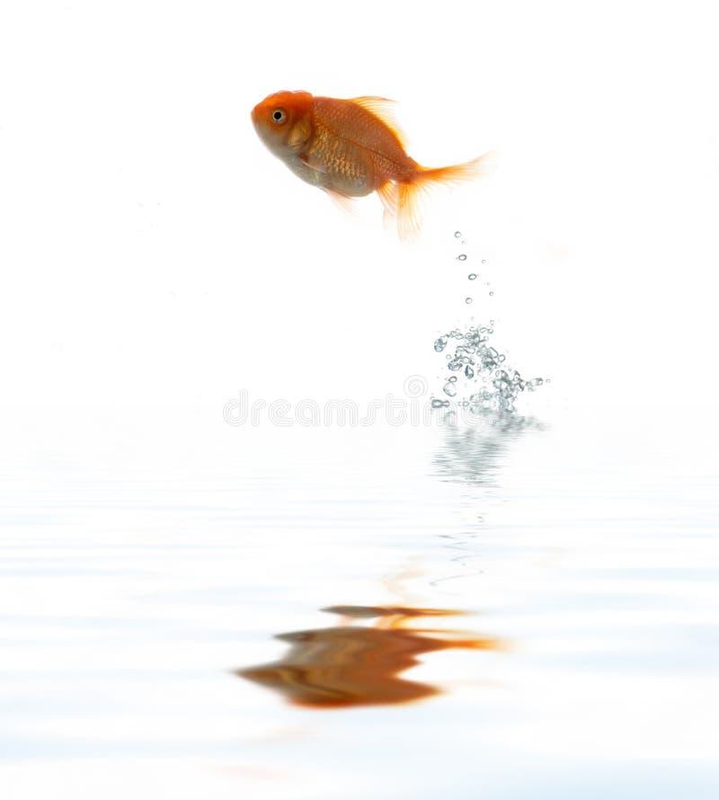 Os animais de estimação pescam na água foto de stock royalty free