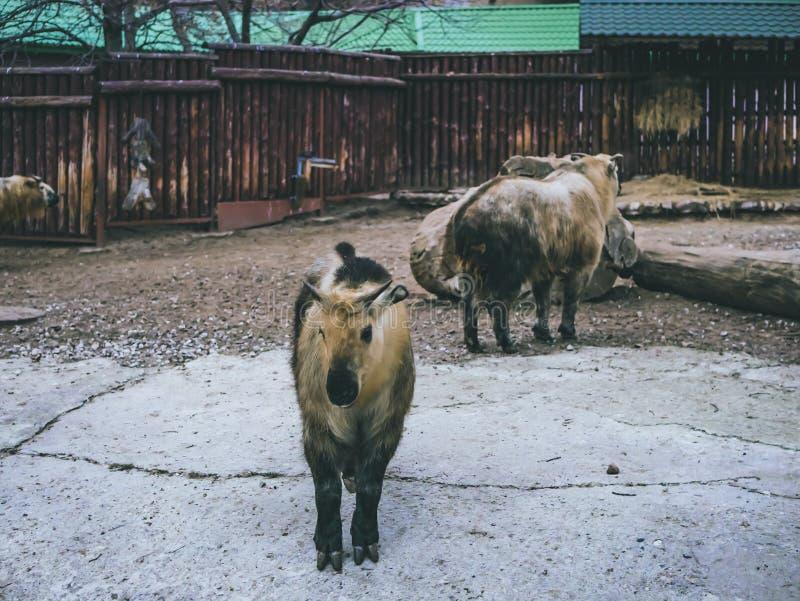 Os animais domésticos no fim do jardim zoológico acima do jardim zoológico cultivam as folhas de outono da floresta fotos de stock