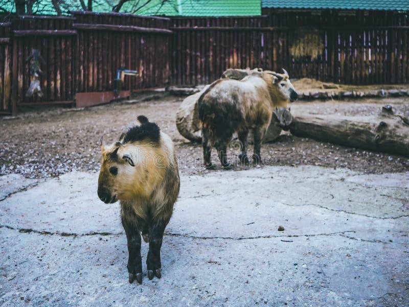 Os animais domésticos no fim do jardim zoológico acima do jardim zoológico cultivam o outono da floresta foto de stock