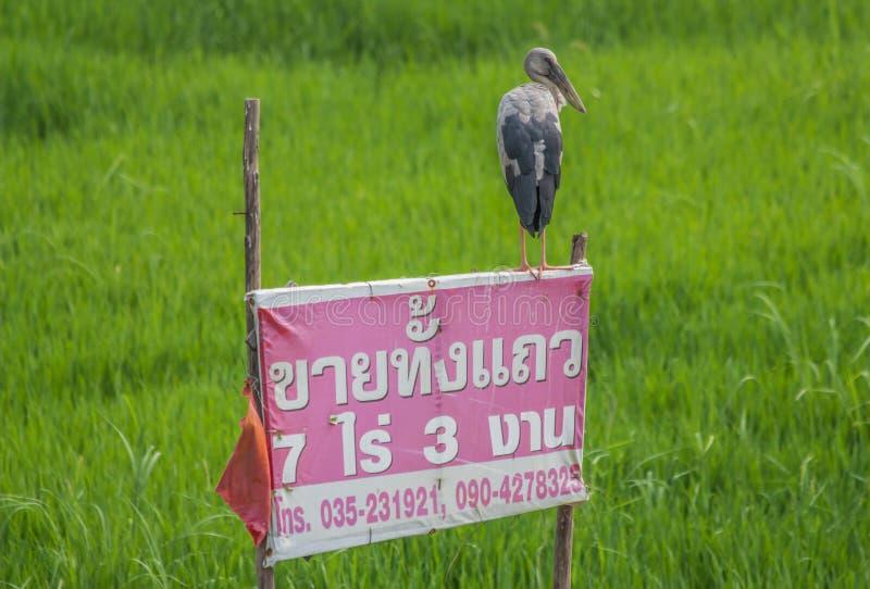 Os animais selvagens maravilhosos de Tailândia fotos de stock