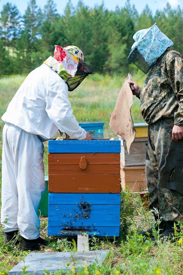 Os apicultor abrem a colmeia após o fumo imagem de stock