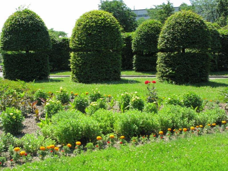 Os arbustos decorativos são cortados no parque da cidade perto dos canteiros de flores foto de stock royalty free