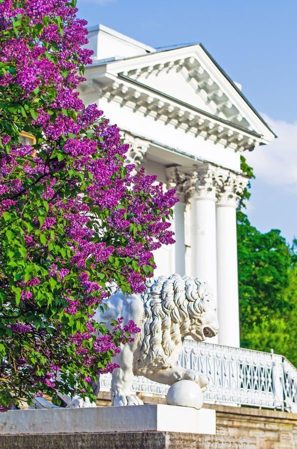 Os arbustos lilás que constroem o verão do parque dos leões da estátua das escadas do patamar do palácio da coluna saem da beleza fotos de stock royalty free