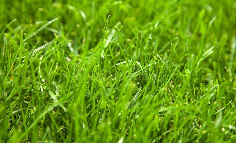 Os belos e frescos antecedentes de grama verde no dia da primavera fecham foto de stock royalty free