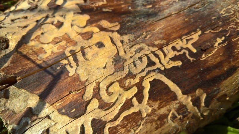 Os besouros comeram uma casca de árvore imagens de stock royalty free