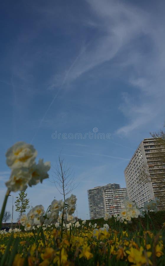 Os blocos de construções e o arty brancos distantes da papoila florescem imagem de stock