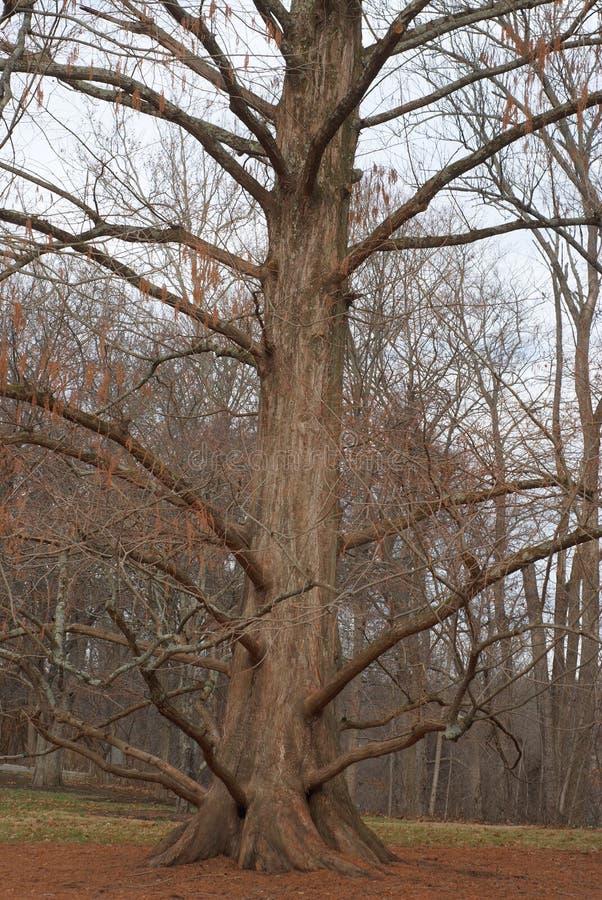 Os braços abertos na floresta, nós respiramos no ar claro, torrado, simplesmente para começar outra vez fotografia de stock royalty free