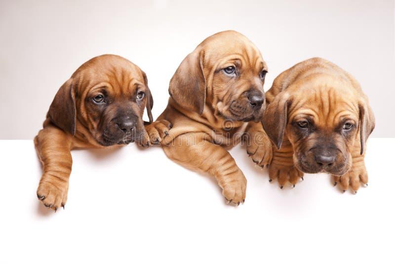 Os cães bonitos emitem uma mensagem! imagens de stock royalty free