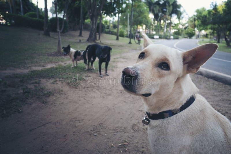 Os cães estão fazendo o amor fotos de stock royalty free