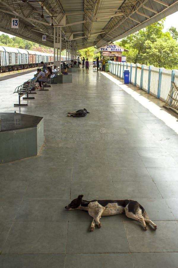 Os cães indianos dormem na plataforma da estrada de ferro perto dos povos de espera imagens de stock