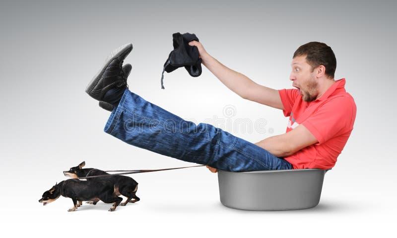 Os cães pequenos puxam o homem em uma bacia, conceito do humor fotos de stock