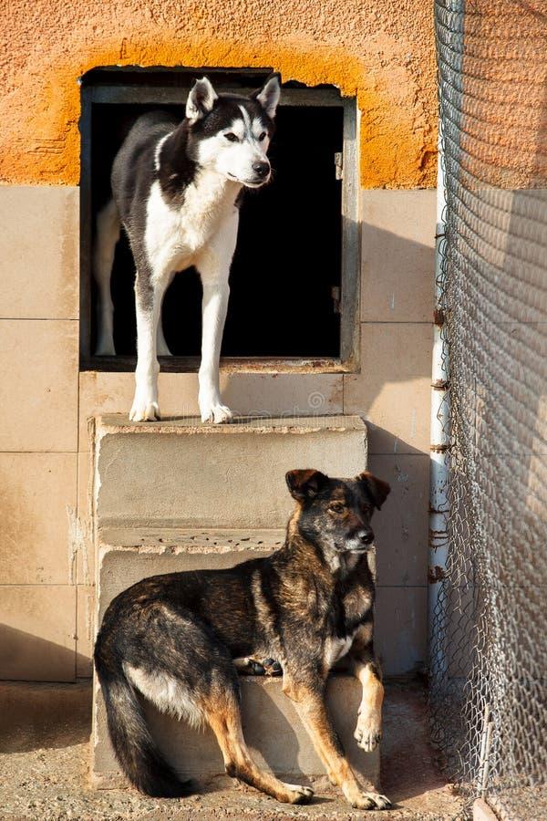 Os cães protegem abandonado imagens de stock