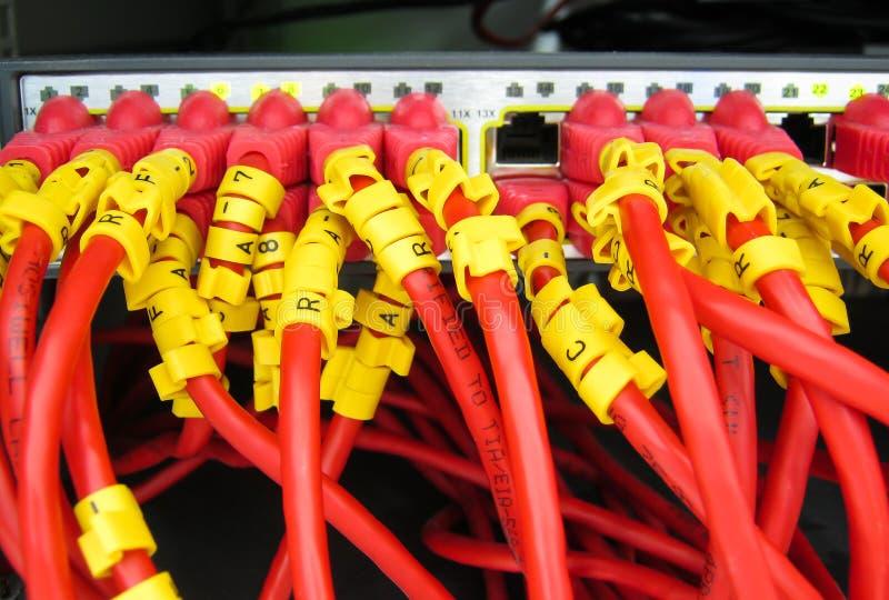 Os cabos do Ethernet RJ45 são conectados ao interruptor do Internet imagens de stock royalty free