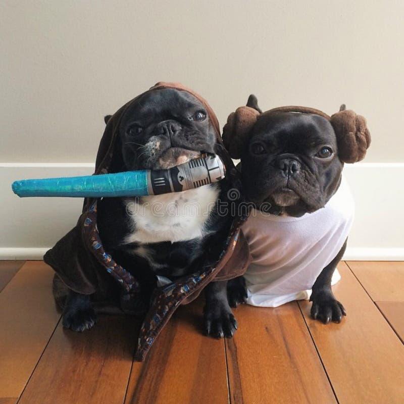 Os cachorrinhos golpeiam para trás fotos de stock royalty free