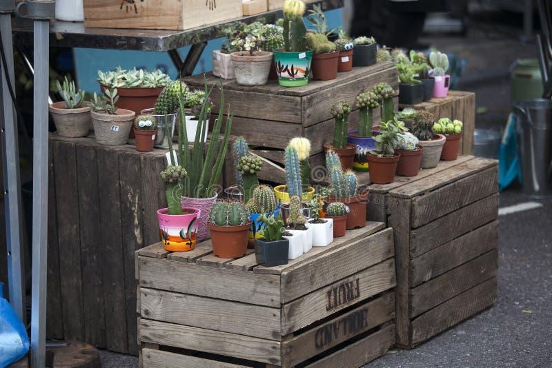 Os cactos são ficados situados em caixas de madeira para a venda no mercado da estrada de Broadway fotografia de stock