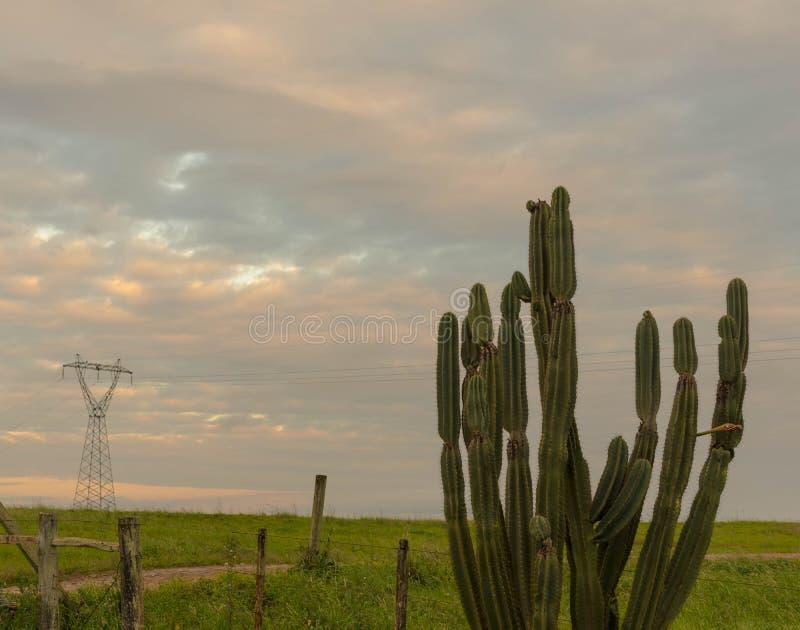 Os cactos verdes e a torre da energia imagem de stock