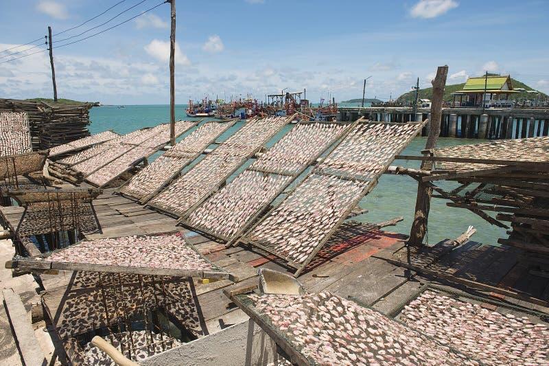 Os calamares na rede secam no sol em Pattaya, Tailândia fotos de stock royalty free