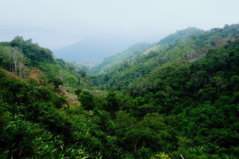 Os campos cancelados indicam uma vez que plantações da coca as forças armadas desde destruído fotografia de stock