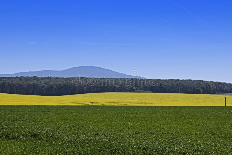 Os campos coloridos foto de stock