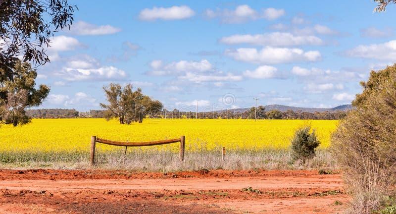 Os campos de exploração agrícola com flores do canola, igualmente chamaram a semente imagens de stock