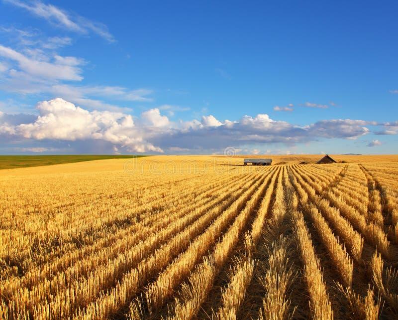 Os campos de Montana imagem de stock royalty free