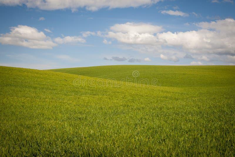 Download Os Campos De Trigo Sob Um Verão Nublam-se Foto de Stock - Imagem de paisagem, azul: 29835124