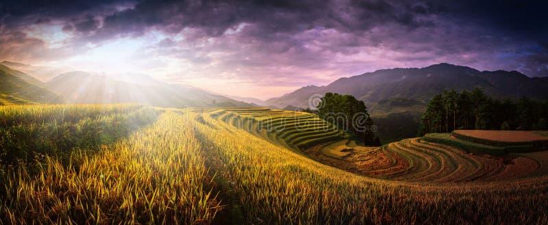 Os campos do arroz em terraced com o pavilhão de madeira no por do sol na MU podem foto de stock