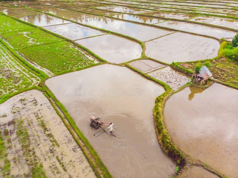 Os campos do arroz s?o inundados com ?gua Almofadas de arroz inundadas M?todos agron?micos de crescer o arroz nos campos flooding fotos de stock royalty free