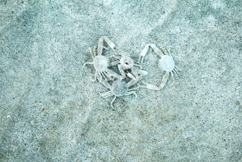 Os caranguejos agrupam, homem e fêmea imagens de stock royalty free