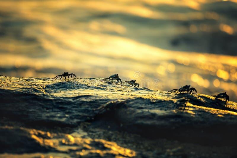 Os caranguejos estão sentando-se na rocha fotografia de stock royalty free