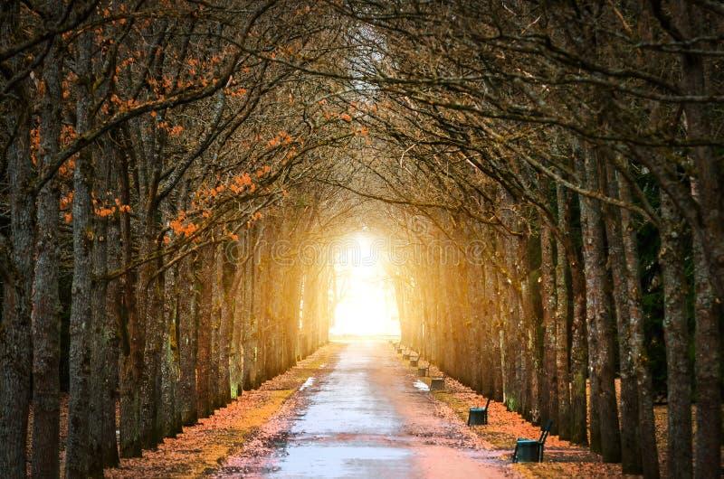 Os carvalhos da árvore escavam um túnel em torno da escuridão, e da luz na extremidade da mola do túnel e da estrada imagens de stock royalty free