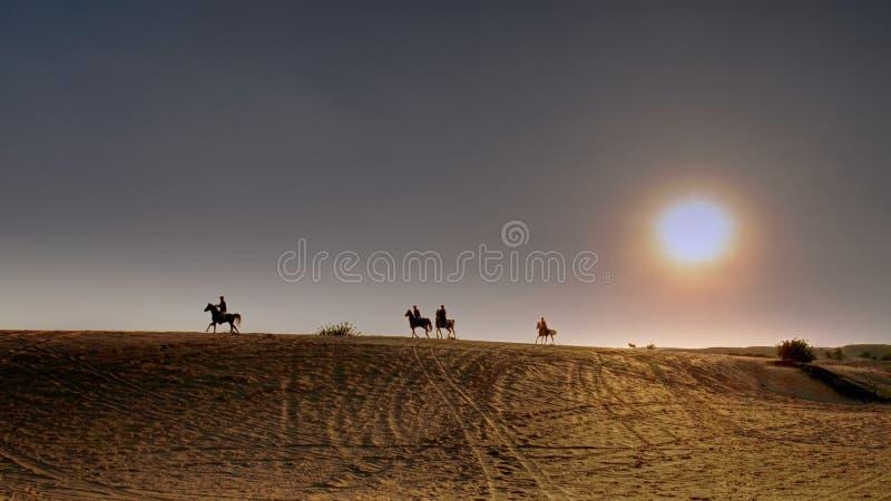 Os cavaleiros em cavalos árabes galopam através do deserto no por do sol fotografia de stock royalty free