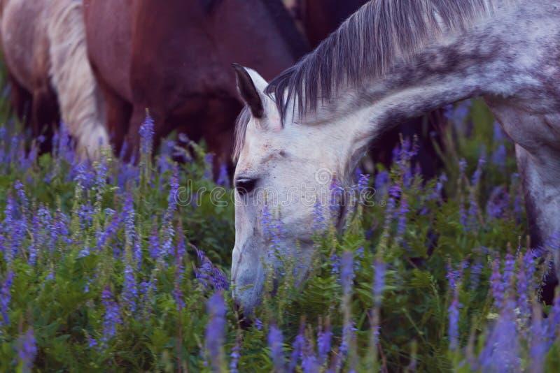 Os cavalos comem uma grama imagem de stock royalty free