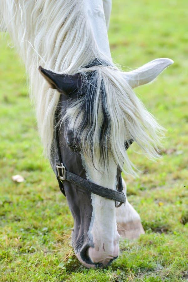 Os cavalos do circo do carnaval vagueiam no jardim foto de stock royalty free