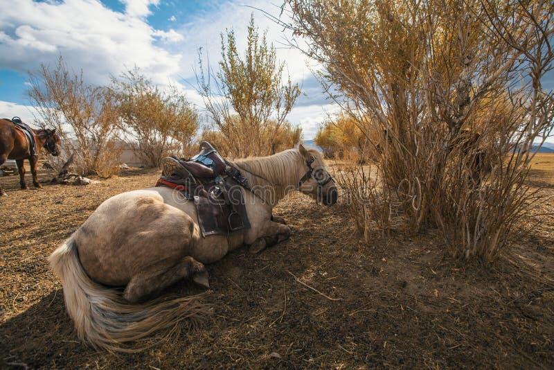 Os cavalos do Mongolian estão perto do Yurt nos estepes de Mongólia ocidental nave imagem de stock