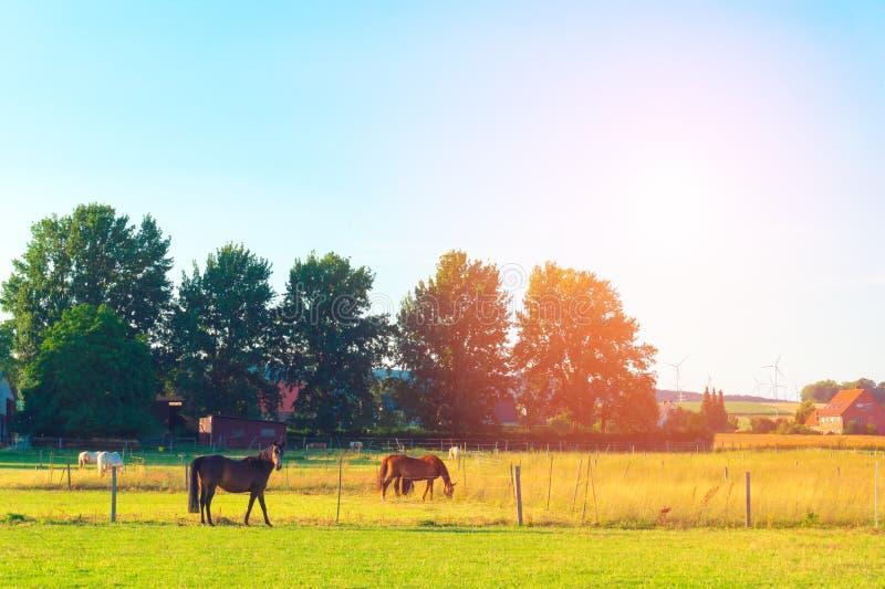 Os cavalos na exploração agrícola fotografia de stock royalty free