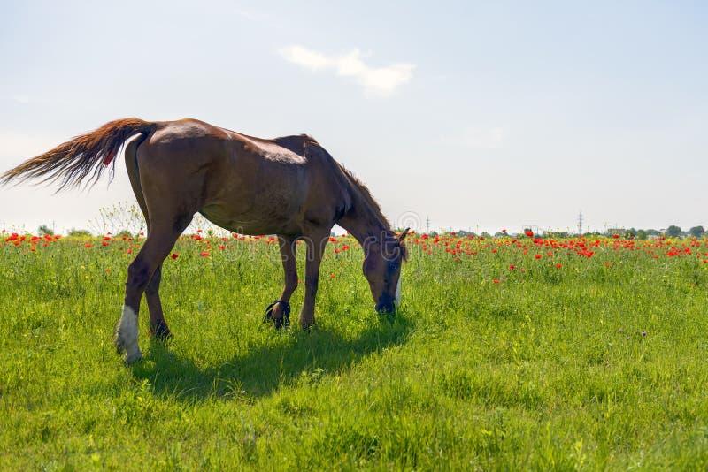 Os cavalos pastam fora imagem de stock royalty free