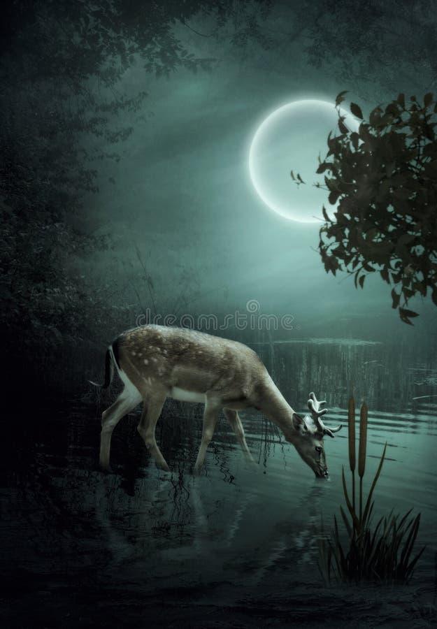 Os cervos da floresta no luar fotografia de stock