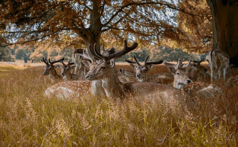 Download Os Cervos Estão Indo Dormir Imagem de Stock - Imagem de árvores, floresta: 80100513