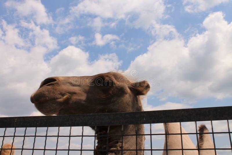 Os cervos no jardim zoológico imagens de stock royalty free