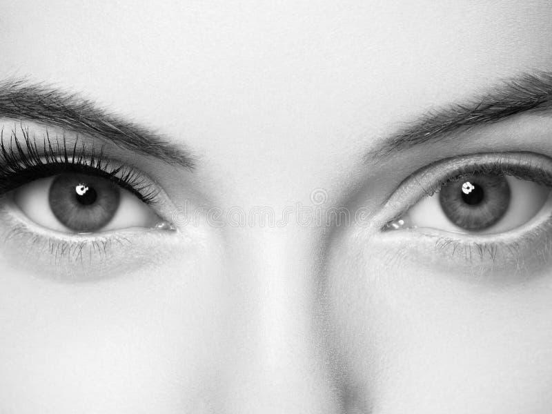 Os chicotes do olho, mulher da extensão do chicote chicoteiam o fim acima de monocromático macro imagem de stock royalty free