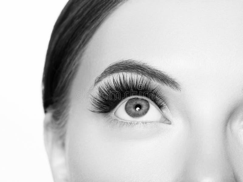 Os chicotes do olho, mulher da extensão do chicote chicoteiam o fim acima de monocromático macro imagens de stock