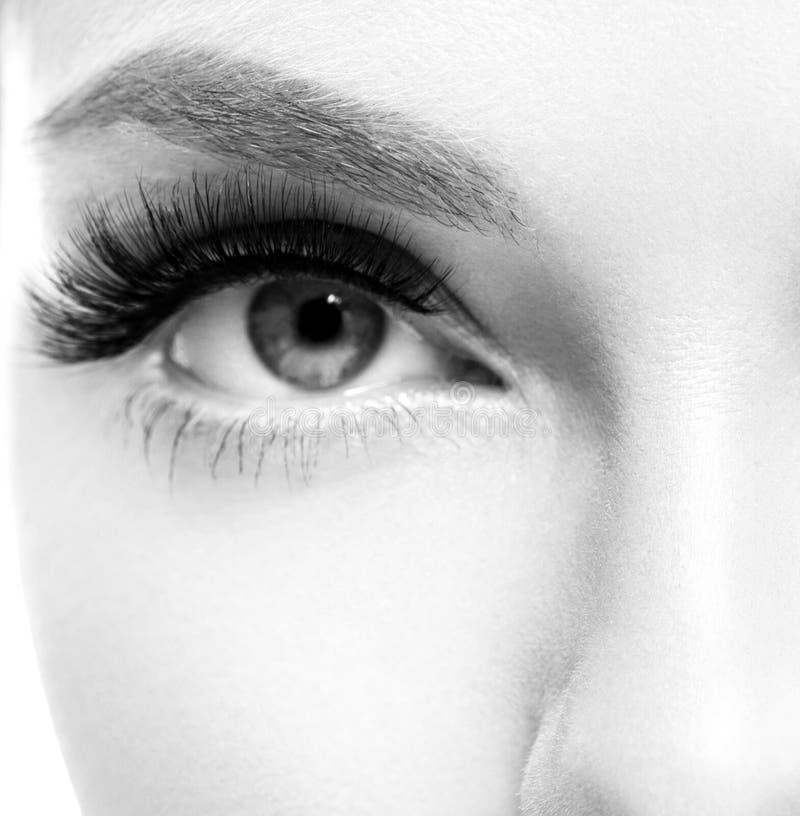 Os chicotes do olho, mulher da extensão do chicote chicoteiam o fim acima do macro fotografia de stock royalty free